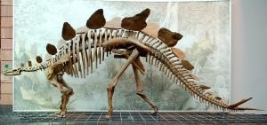 Stegosaurus_Senckenberg-1